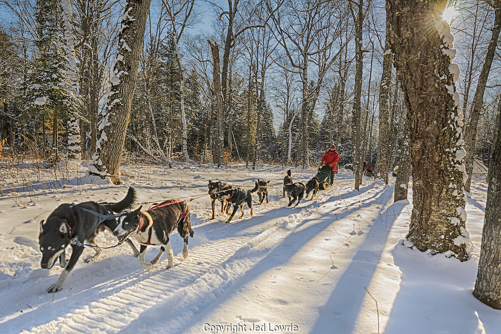 """One of the best Christmas gifts I've received yet. A chance to take a team of dogs out for the day. """"The Calm"""" is aptly named due to a cacophony of excitement and anticipation prior to departure. At the very moment of embarkment the serenity begins."""