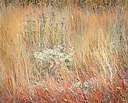 Patterns in Autumn Grass Field, Eastern WA.