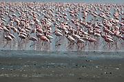 Kenya, lake naivasha, Kenya, Flamingos