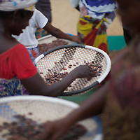 At the CAYAWE coop in Aniassue in the Ivory Coast, women chaff cocoa beans at the end of a day drying them in the sun. The coop has nearly 1,500 members and can produce around 5,000 tons of cocoa a year. With the Fairtrade premium from 2015, amongst other things, CAYAWE built a high school for up to 210 students and drilled six wells.