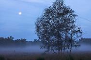 birch trees and the moon in the Wahner Heath near Telegraphen hill, morning fog, Troisdorf, North Rhine-Westphalia, Germany.<br /> <br /> Birken und Mond in der Wahner Heide nahe Telegraphenberg, Morgennebel, Troisdorf, Nordrhein-Westfalen, Deutschland.