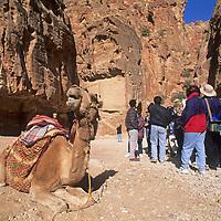 A camel waits to carry tourist through Jordan's mysterious Petra, a World Heritage Site.