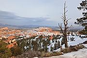 USA, Utah, Bryce Canyon National Park, snag at Sunrise Point