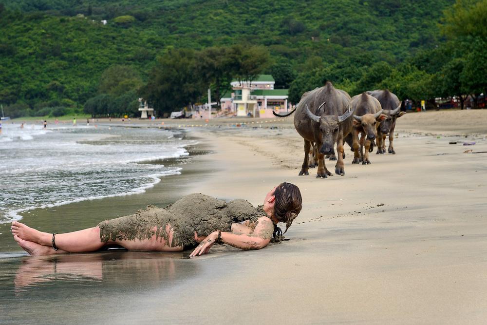 Wild buffalos in Pui O, Lantau Island, Hong Kong, China. 贝澳野生水牛,大屿山,中国香港。