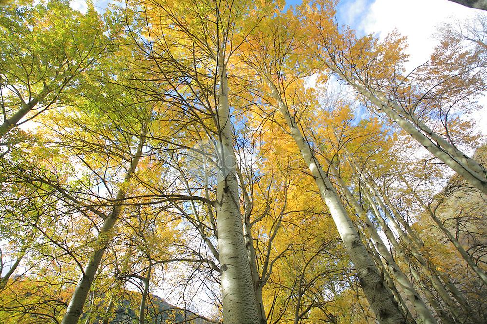 Brieva en otoño. La Rioja ©Daniel Acevedo / PILAR REVILLA