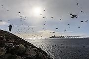 A flock of birds coming in from the ocean to sit down in the birdmontain at Hornøya, Norway | En flokk med fugler kommer inn fra havet  for å slå seg til i fuglefjellet ved Hornøya, Norge.