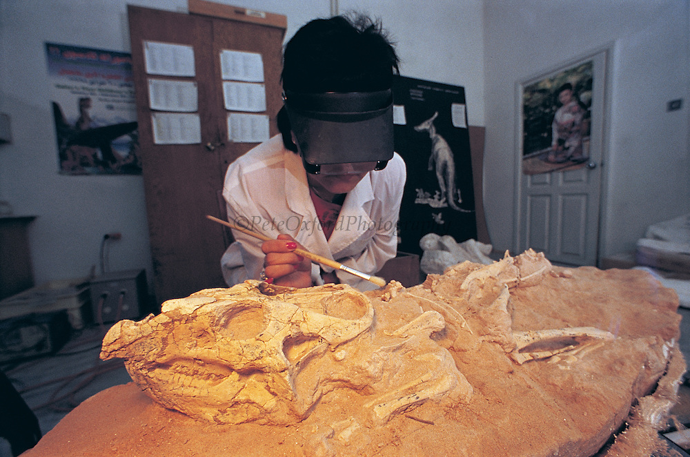 Ichinnorov. L (Technition) cleaning Protoceratops<br /> Paeleontological Lab<br /> Ulaanbaatar<br /> Mongolia