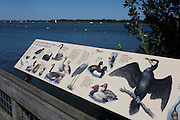 Examples of bird wildlife to be found after the extensive conservation project at Barton Broad in the Norfolk Broads. The information board shows us the species and kinds of birdlife thriving in this wetland, a region of east Anglia known for its important natural habitats after decades of neglect. Birds such as Coot, Mallard, Moorhen, Tern and Grebe are all surviving thanks to investment and a commitment to protect native species. Barton Broad is the largest Broad in the Ant Valley. It is a man-made landscape impacted by natural processes - the open water is a result of flooded peat diggings. The fen habitat around Barton Broad contributes to the largest fenland expanse in the UK and contains rare vegetation.
