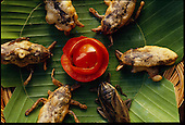 Man Eating Bugs: Thailand