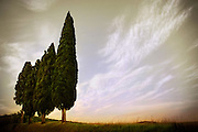Four Cypress trees in Tuscany Italy.