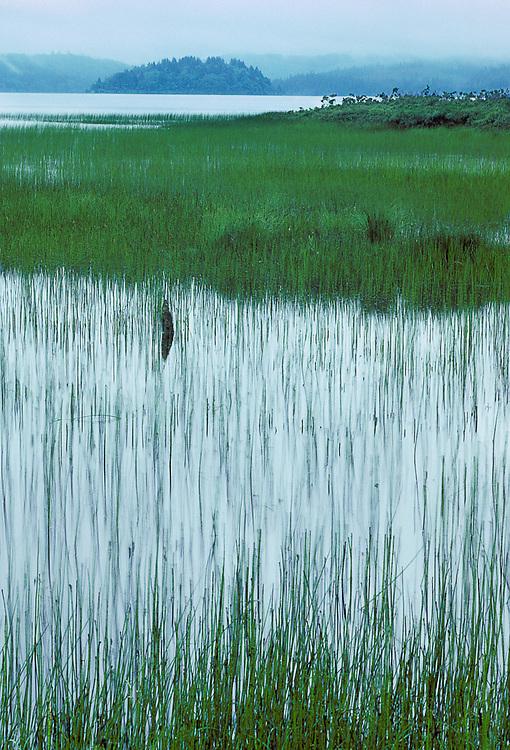 Olympic National Park, Washington, USA. Lake Ozette.