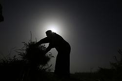 April 29, 2019 - Khan Younis, The Gaza Strip, Palestine - Farmers east of Khan Younis city southern the Gaza Strip harvest wheat. (Credit Image: © Hassan Jedi/Quds Net News via ZUMA Wire)