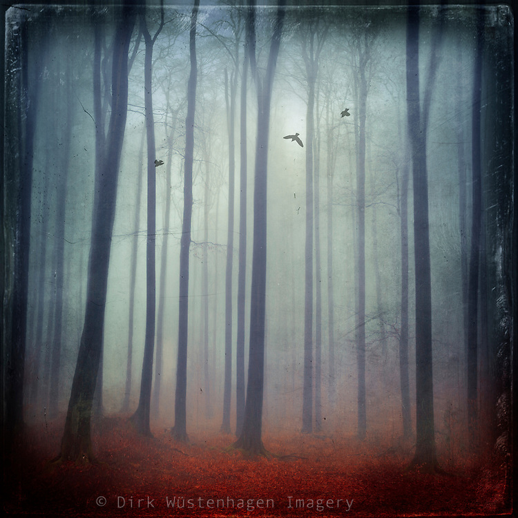 Abstraction of a forest in foggy weather.