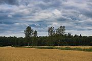 Clouds over wheat fields and few birch trees in between, near Aloja, Northern Vidzeme, Latvia Ⓒ Davis Ulands   davisulands.com