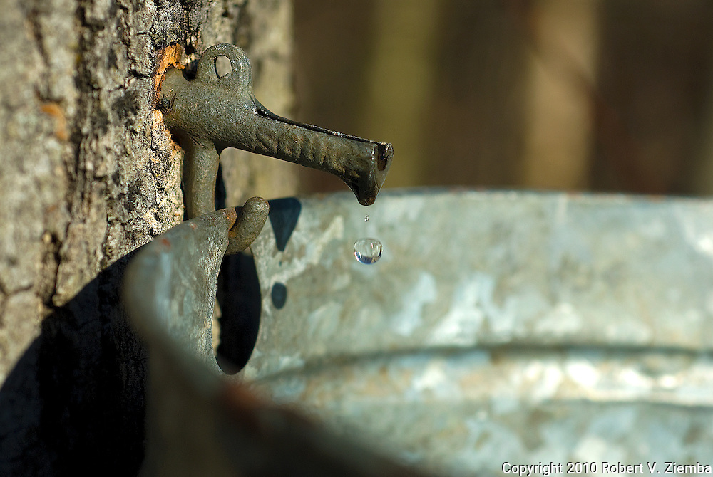 """""""Soul""""-Maple sap dripping in a bucket."""