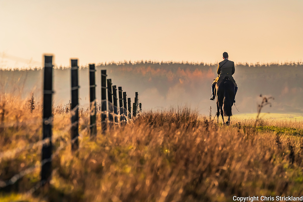 Lillisleaf, Hawick, Scottish Borders, UK. 17th November 2018. The Duke of Buccleuch Foxhounds flushing foxes to guns near Lillisleaf village in the Scottish Borders.