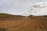 Domaine de Canet-Valette Cessenon-sur-Orb St Chinian. Languedoc. The vineyard. France. Europe.