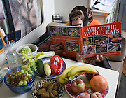 Ricki the Chimp reading What the World Eats during a break in a shooting session on what he himself eats in one day. Ricki is owned by circus folk Pam Rosaire-Zoppe and Roger Zoppe. Photographed in their motor home at the Bailiwick Ranch and Discovery Zoo in Catskill, NY.