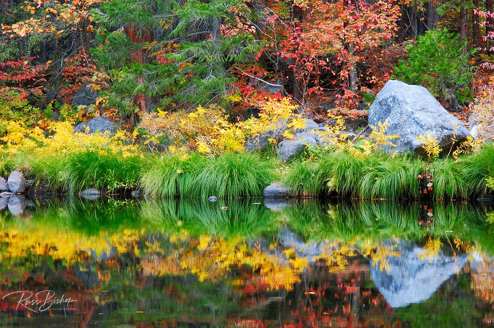 Fall color along the Merced River, Yosemite Valley, Yosemite National Park, California