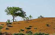 Chihuahuan Desert/Carlsbad/Permian