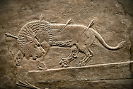 Assyrian relief sculpture panel `from the  lion hunt showing a dying lion.  From Nineveh  North Palace, Iraq,  668-627 B.C.  British Museum Assyrian  Archaeological exhibit no ME 124857 .<br /> <br /> If you prefer to buy from our ALAMY PHOTO LIBRARY  Collection visit : https://www.alamy.com/portfolio/paul-williams-funkystock/ancient-assyria-antiquities.html  Refine search by adding background colour, place, subject, museum etc into the LOWER SEARCH WITHIN GALLERY box to <br /> <br /> Visit our ANCIENT ASSYRIAN PHOTO COLLECTIONS for more photos to download or buy as wall art prints https://funkystock.photoshelter.com/gallery-collection/Ancient-Assyrian-Art-Artefacts-Antiquities-Historic-Sites-Pictures-Images-of/C0000cjRqQyJjLag