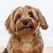20121126 Murphy Dog