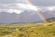 Rainbow over Alaska Range from Sable Pass, Denali National Park, Alaska. Digital original ©Robin Brandt #06_2788