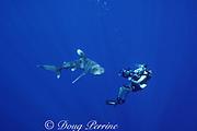 videographer and oceanic whitetip shark, Carcharhinus longimanus, Endangered Species, Kona, Hawaii ( the Big Island ), USA ( Central Pacific Ocean ) MR 272