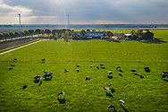 Nederland, Zeewolde, 20181020<br /> Koeien van een melkveebedrijf in de wei.<br /> <br /> Foto (c) Michiel Wijnbergh