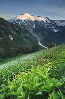 Ruth Mountain seen from wildflower meadows of Hennegan Peak, Mount Baker Wilderness North Cascades Washington
