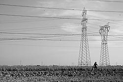 brindisi - campi coltivati a rione s.elia