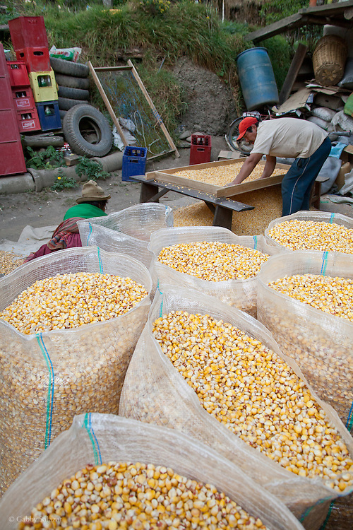 Workers sort corn to go to marktet in the village of Pilco Grande, a Quechua speaking native community in Southeastern Peru that is running a reforestation plot in the Andes near Cusco and the Interoceanic Highway.