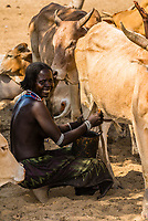Woman milking cow, Arbore tribe village, Omo Valley, Ethiopia.