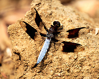 Dragonfly. Image taken with a Fuji X-T2 camera and 100-400 mm OIS telephoto zoom lens