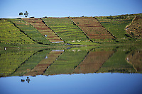 Reflection in Lake Merdada, Dieng Plateau, Java, Indonesia