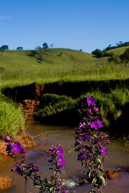 Jeceaba_MG, Brasil...Detalhe de uma flor em frente a um riacho em Jeceaba, Minas Gerais...Detail of a flower in front of a stream in Jeceaba, Minas Gerais...Foto: BRUNO MAGALHAES /  NITRO