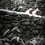 Snow over frog sculpture