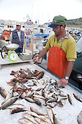 Fish stall in the port of Favignana in the Aegadian Islands (Isole Egadi), western Sicily, Italy