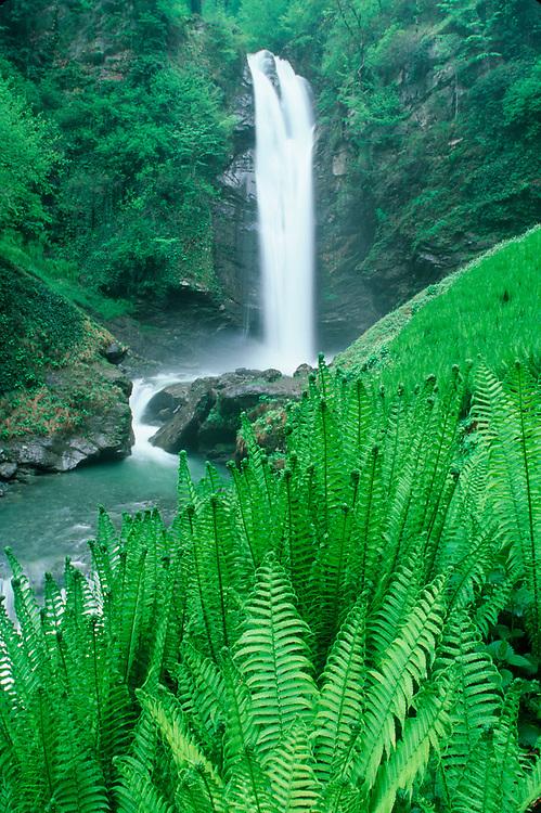 Gurgeniani Waterfall and ferns, Lagodekhi National Park, The Country of Georgia