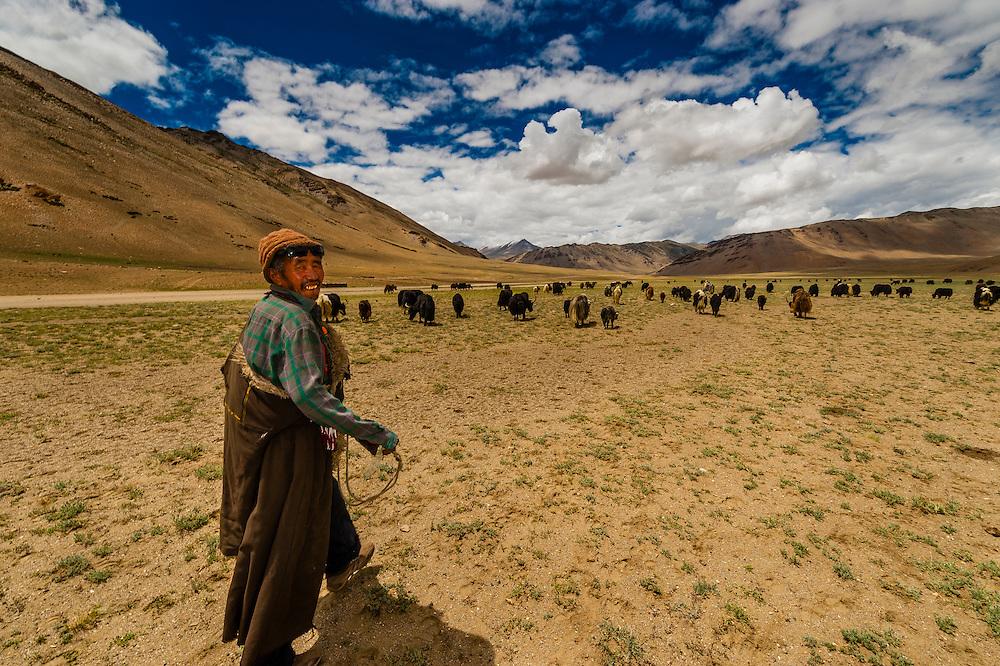 Nomadic yak herding, Himalayas, near Pang, Ladakh, Jammu and Kashmir State, India.