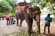 6th September 2014, New Delhi, India. An elephant handler assesses his work of decorating his elephant for an Indian wedding as a street sweeper walks by, at New Rajinder Nagar, New Delhi, India on the 6th September 2014<br /> <br /> Elephant handlers (Mahouts) eke out a living in makeshift camps on the banks of the Yamuna River in New Delhi. They survive on a small retainer paid by the elephant owners and by giving rides to passers by. The owners keep all the money from hiring the animals out for religious festivals, events and weddings, they also are involved in the illegal trade of captive elephants. The living conditions and treatment of elephants kept in cities in North India is extremely harsh, the handlers use the banned 'ankush' or bullhook to control the animals through daily beatings, the animals have no proper shelters are forced to walk on burning hot tarmac and stand for hours with their feet chained together. <br /> <br /> PHOTOGRAPH BY AND COPYRIGHT OF SIMON DE TREY-WHITE<br /> + 91 98103 99809<br /> email: simon@simondetreywhite.com photographer in delhi