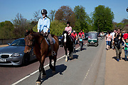 Horse riding in Hyde Park along a stretch of cycle path sharing the road with cars and bicycles.