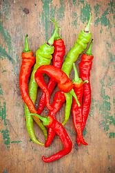 Sweet pepper 'Lombardo'