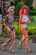 A group of air hostesses, with all over body paint,  calling themselves the flying tigers at the start - Naked runners take part in the ZSL London Zoo Streak for Tigers. They are raising money for tigers whose group name is, apparently, a streak.