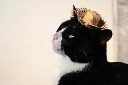 June 23, 2017 - Devido as comemorações para a grande Festa de São João, neste sábado (24)  que é tido como uma das festas mais típicas do Brasil, alguns pets usam trajes juninos. (Credit Image: © Aloisio Mauricio/Fotoarena via ZUMA Press)