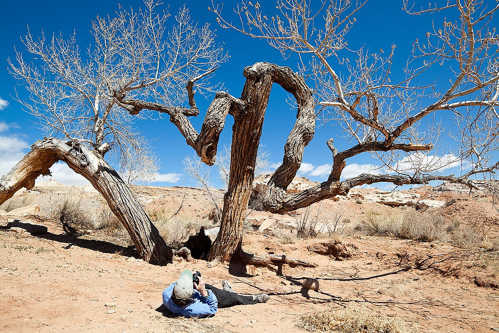 Robert Anderson photographs a deformed cottonwood tree (Populus sp) from the ground in the San Rafael Swell, Utah.