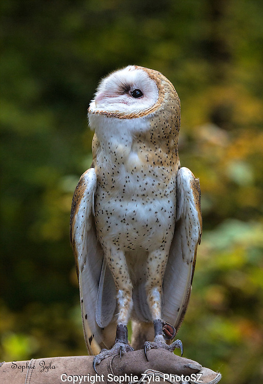 ET Phone Home!<br /> Banshee Barn Owl APCH