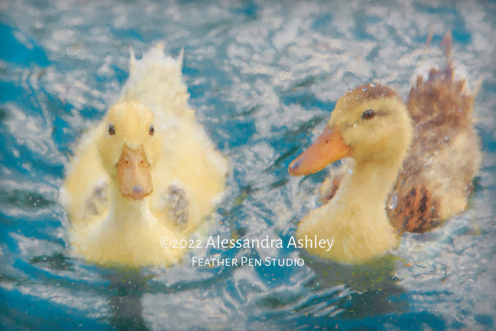 """""""Twin"""" mallard hybrid ducklings, covered with water droplets from splashing and playing in pond.  Watercolor effects blended with original photo."""