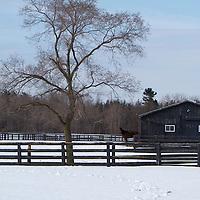 Thoroughbred Farm 2011 - Sam Son Farm