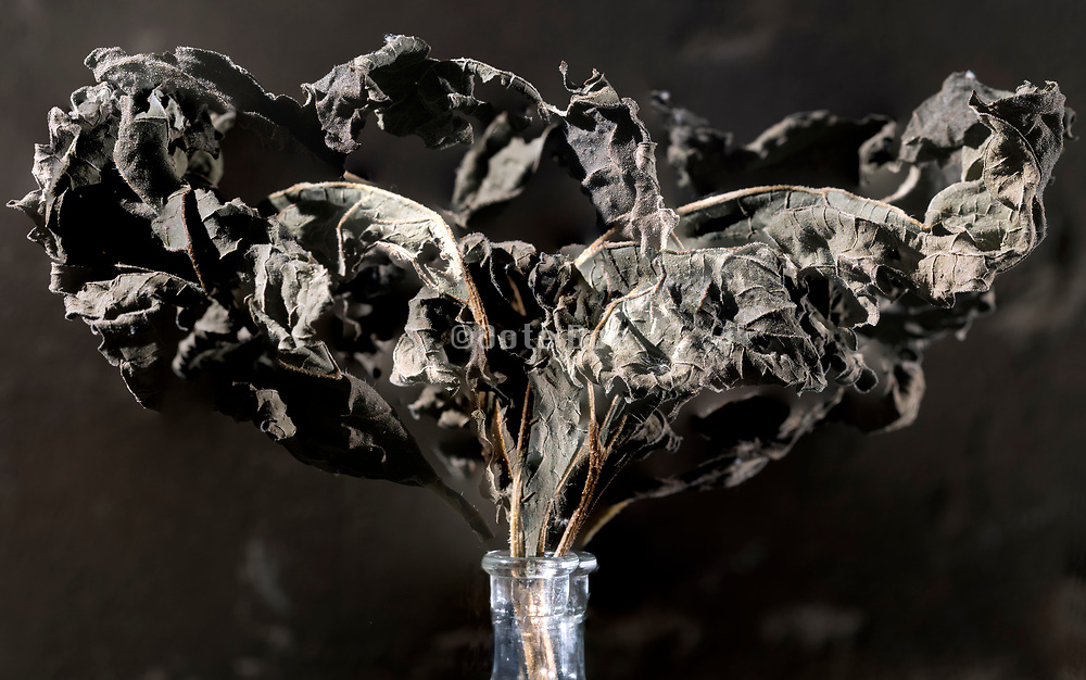dried brown colored leaf still life